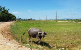 Thừa Thiên Huế ban hành quy định mới về việc tách thửa đất